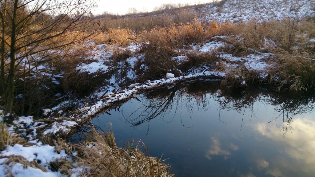 Niedaleko od nas Świętokrzyskie Smaki - Łagowica, dzieło bobrów